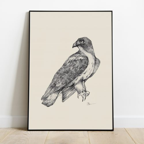 Poster met een roofvogel